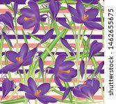 crocuses. crocus. beautiful... | Shutterstock .eps vector #1462655675