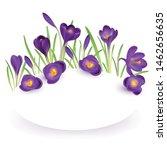 crocuses. crocus. beautiful... | Shutterstock .eps vector #1462656635