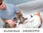 Stock photo cat and dog playing together on the bed in the apartment close up happy pwner smiling 1462822955