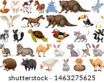 diverse set of isolated animals ... | Shutterstock .eps vector #1463275625