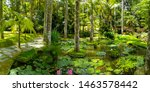 Small photo of Terra Nostra Park in the Azores is a large botanical garden with a huge variety of plants and trees and with lakes, streams and a pool of volcanic origin.
