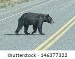 A Black Bear Crossing The Road...