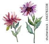 Aster Floral Botanical Flowers. ...