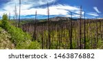 Burned Trees from the West Fork Complex Fire in 2013 Panoramic
