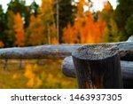 The Deep Wooden Grain Of An Ol...