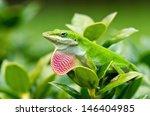 Green Anole Lizard  Anolis...