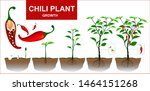 Chili Plants Isolated On A...