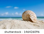 Small Nautilus Shell  With...