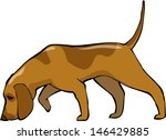 bloodhound dog on a white... | Shutterstock .eps vector #146429885