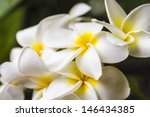group of beautiful white and... | Shutterstock . vector #146434385