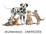 pets animals group collage for... | Shutterstock . vector #146442356