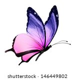 Stock photo color butterfly flying isolated on white 146449802