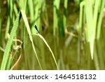 Stock photo a colorful dragonfly on plant closeup of a dragonfly odonata sitting on a leaf dragonfly blue 1464518132