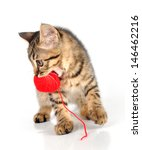 cute little 3 months old kitten ... | Shutterstock . vector #146462216