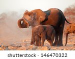 african elephants  loxodonta... | Shutterstock . vector #146470322