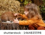 Stock photo baby girl stroking rabbit the child is in contact with the pet rabbit autumn day at the petting 1464835598