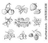 Hand Drawn Berries. Cherry...