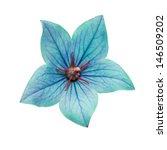 Stock photo sweet flora on white isolate background 146509202