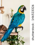 Colorful Blue Wing Macaw...