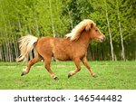 Cute Red Pony Running Trot At...