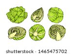 cabbage collection botanical... | Shutterstock .eps vector #1465475702