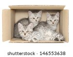 Three Small Kittens In A...