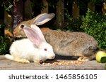 Stock photo rabbit breeding farm rabbits rabbits of different breeds 1465856105