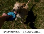 Stock photo playing catch with a dog 1465996868