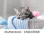 Stock photo gray tabby kitten sleeps in a basket with balls of yarn 146610068