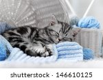 Stock photo gray tabby kitten sleeps in a basket with balls of yarn 146610125