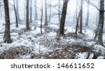 winter time in the forest. | Shutterstock . vector #146611652