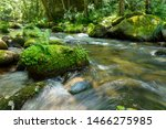 Forest Stream With Green...