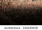 crowd at concert | Shutterstock . vector #146650028