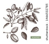 almond vector illustrations.... | Shutterstock .eps vector #1466532785