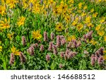 Small photo of Nettleleaf horsemint (Agastache urticifolia) and little sunflower (Helianthella uniflora) are wildflowers that grow on open mountainsides