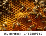 bees swarm their nest ... | Shutterstock . vector #1466889962