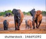 Fighting Elephants At Waterhole