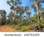 Small photo of Gravel track between rare Jarrah trees growing in a firewood collection area of the National park between Donnybrook and Capel south western Australia in mid winter.
