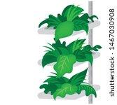 vertical farming flat style...   Shutterstock .eps vector #1467030908