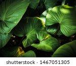 bon leaves dark texture... | Shutterstock . vector #1467051305