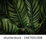 bon leaves dark texture... | Shutterstock . vector #1467051308