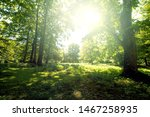 Green Summer Forest With Brigh...