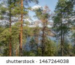 The quiet wild forest and lonely trees on the shore of the Saimaa lake in the Linnansaari National Park in Finland - 12