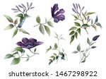Picturesque Clematis Branches...
