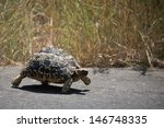 Stock photo why did the tortoise cross the road 146748335