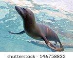 sea lions swimming underwater | Shutterstock . vector #146758832