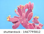 Fashion Cactus Coral Colored On ...