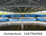 Small photo of Jewish Autonomous region, Russia - July 26, 2019: Sturgeon fish hatchery in Vladimirovka. Jewish Autonomous region, far East, Russia.