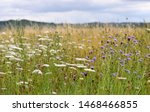 Summer Wild Flower Meadow In...