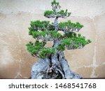Natures Manmade Sculptures Of...